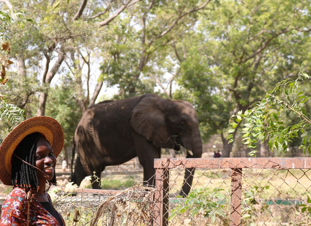 Wumi posing with an Elephant inside Kano Zoo